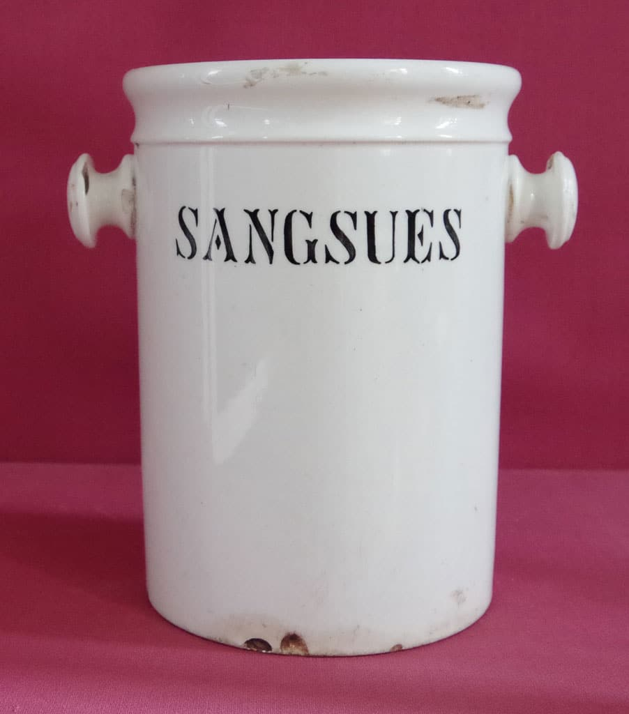 Pot de pharmacie : Sangsue